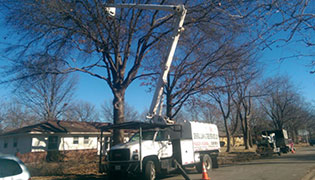 Blue Springs Tree Services