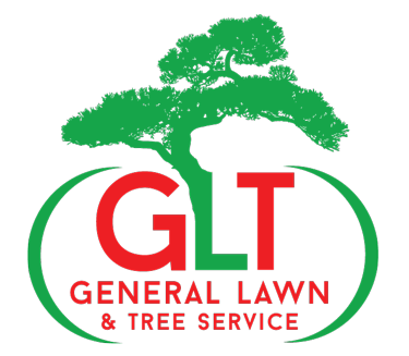 Independence, Lee's Summit and Blue Springs Tree Service
